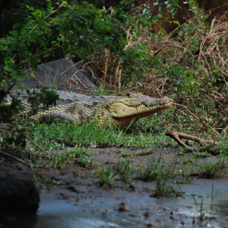 krokodil äthiopien
