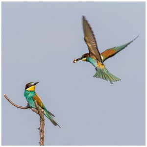 birdwatching äthiopien