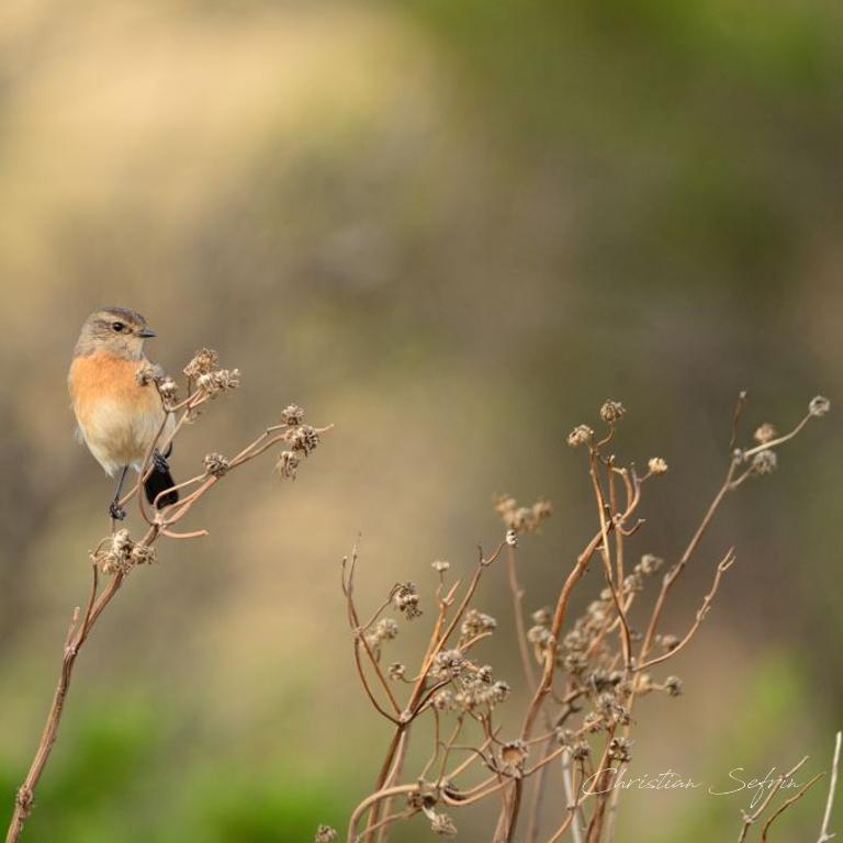 birdwatching kamerun