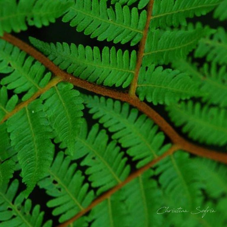vegetation mount cameroon nationalpark