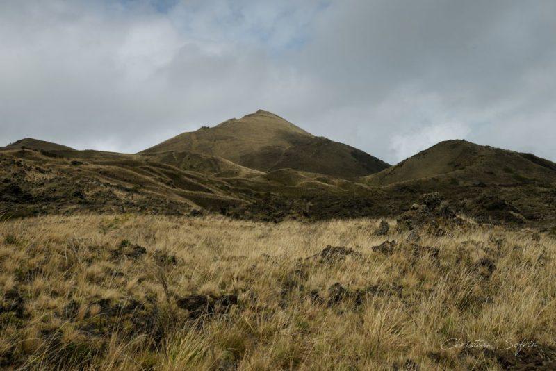 grasland mount cameroon nationalpark