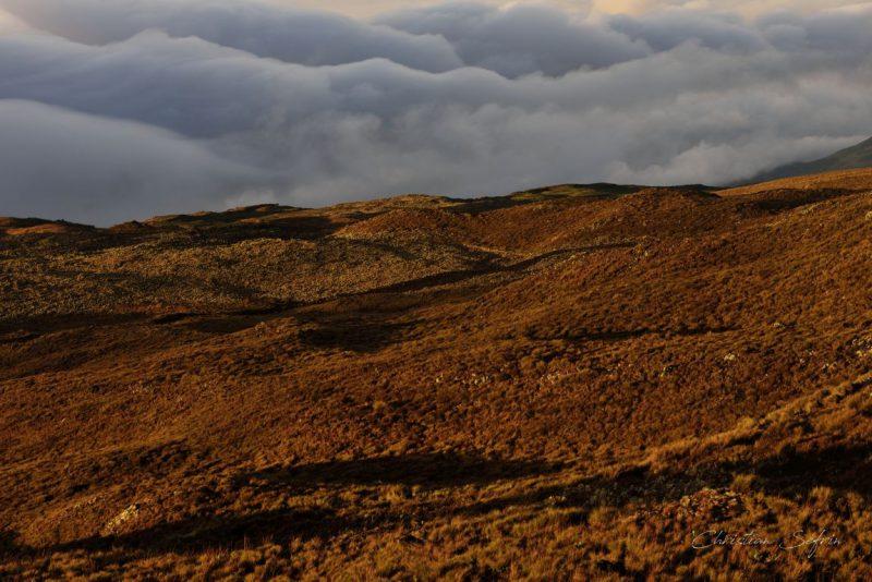 mount cameroon nationalpark