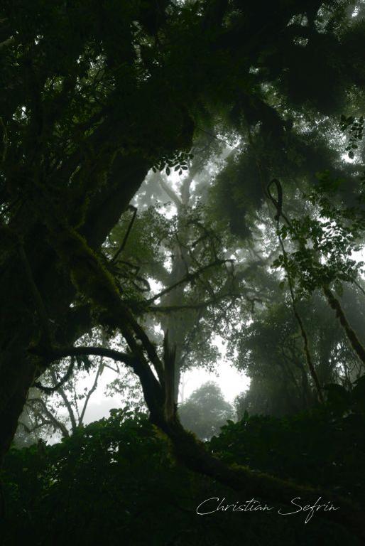 regenwald mount cameroon nationalpark