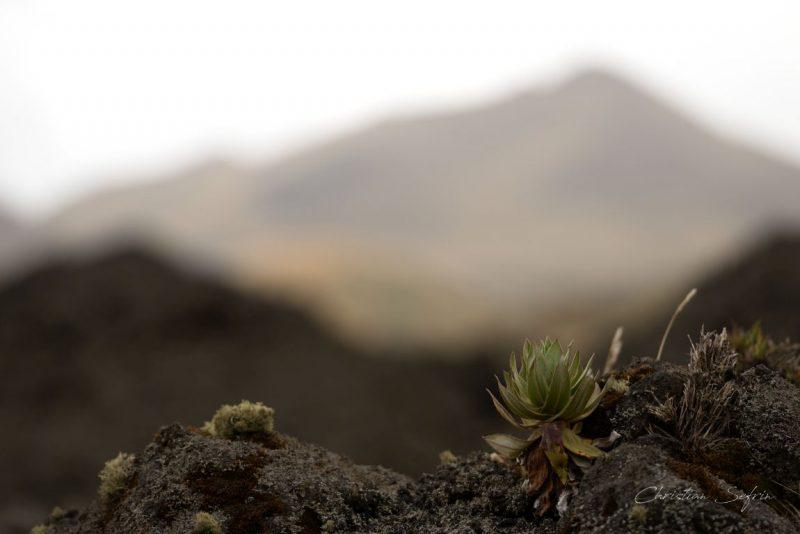 lava mount cameroon nationalpark